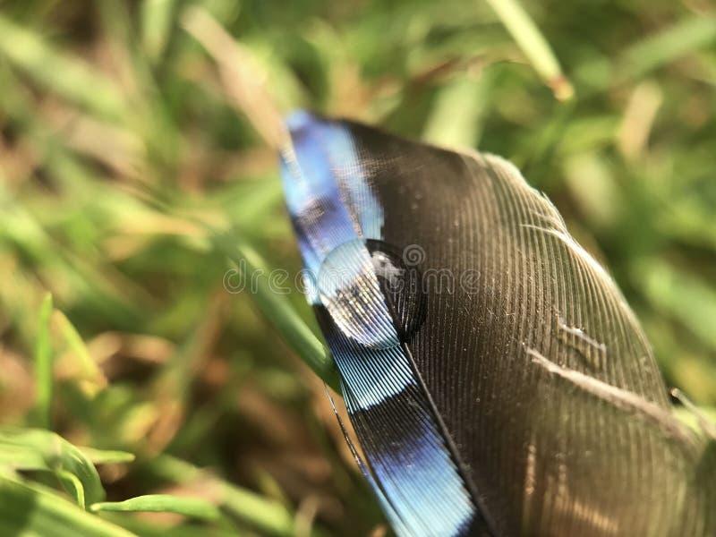 Падение росы на пере стоковое изображение