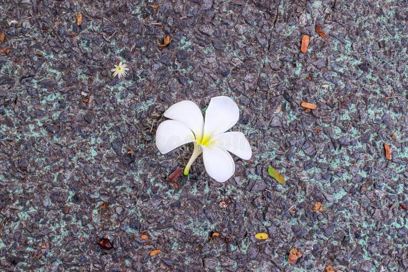 Падение цветка к земле стоковые изображения rf