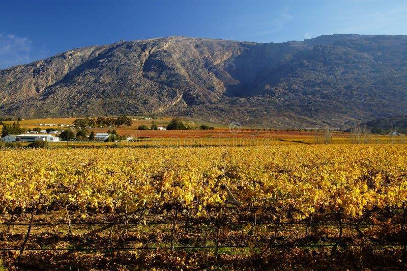 падение vineyards15 стоковая фотография rf