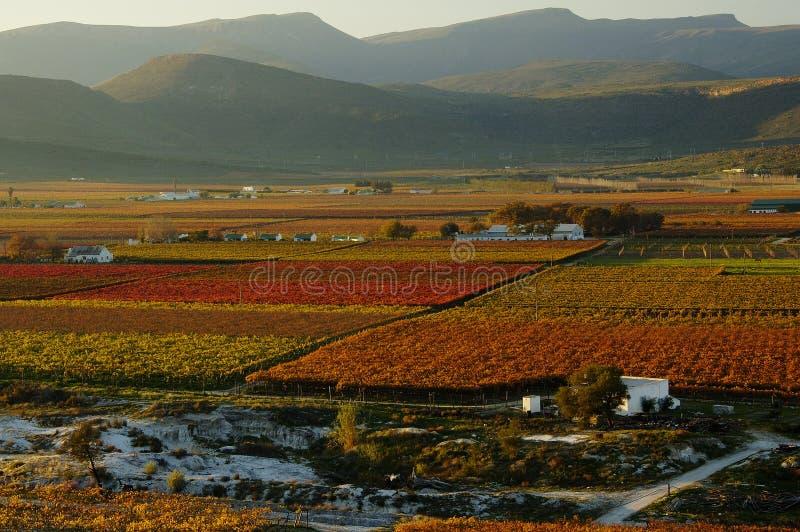 падение vineyards22 стоковое изображение