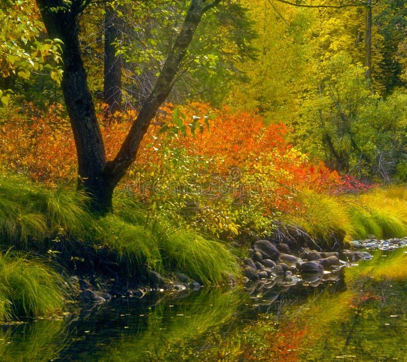 падение yosemite цветов california стоковые изображения