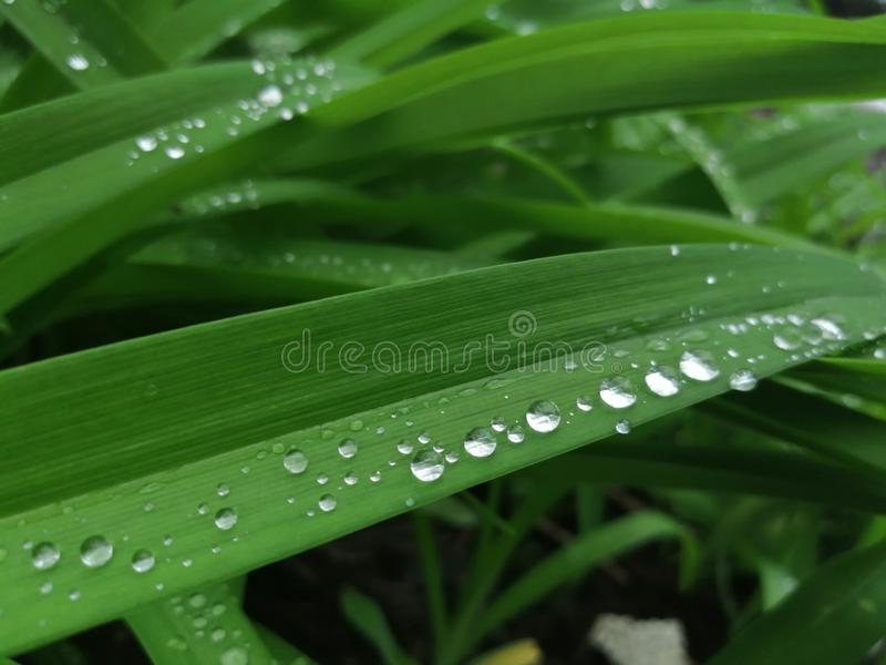 Падения воды в зеленой траве стоковая фотография