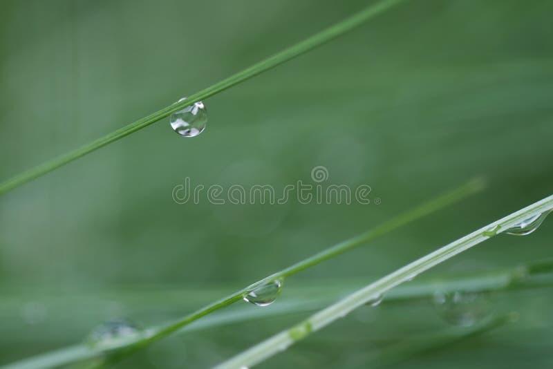 Падения воды зеленой травы стоковое фото rf