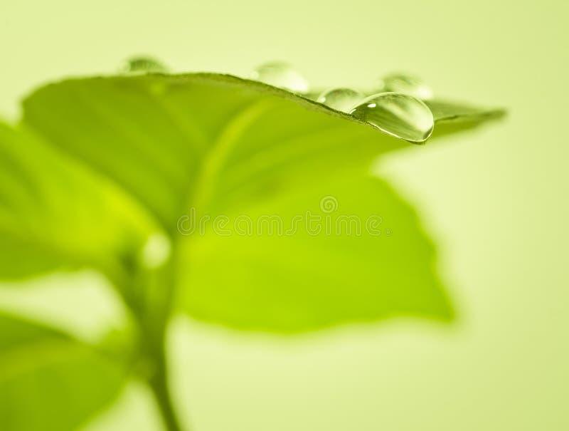 Падения воды на листьях. стоковое фото rf