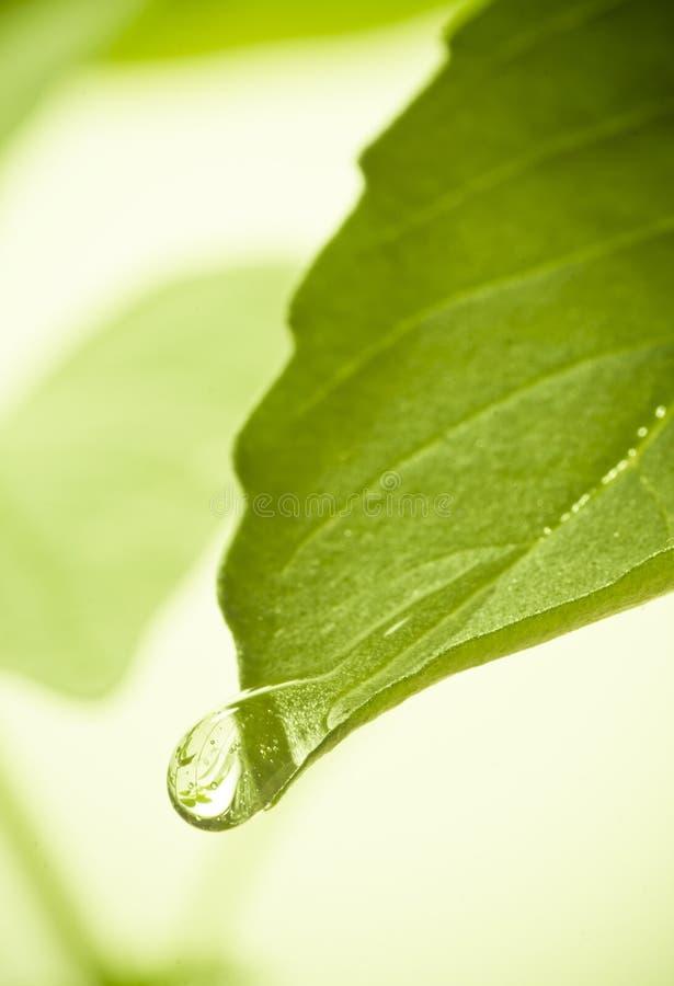 Падения воды на листьях. стоковые фото
