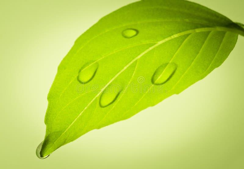 Падения воды на листьях. стоковая фотография