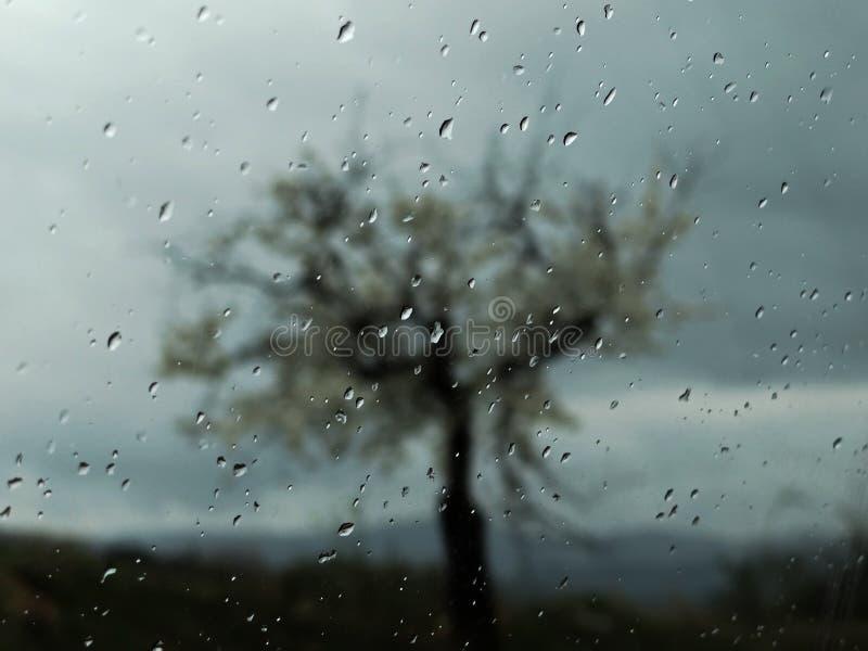 Падения дождя на окне с силуэтом дерева стоковое фото rf
