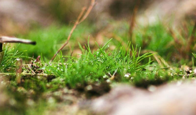 Падения росы на зеленой траве стоковые фотографии rf