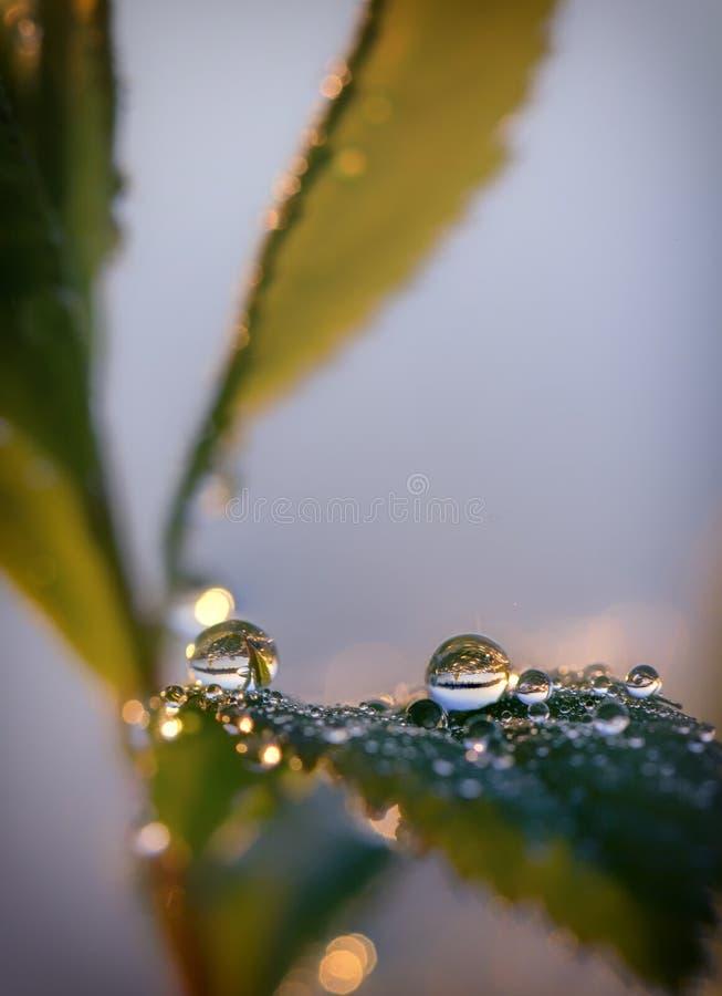 Падения росы на зеленом конце лист вверх по предпосылке стоковая фотография