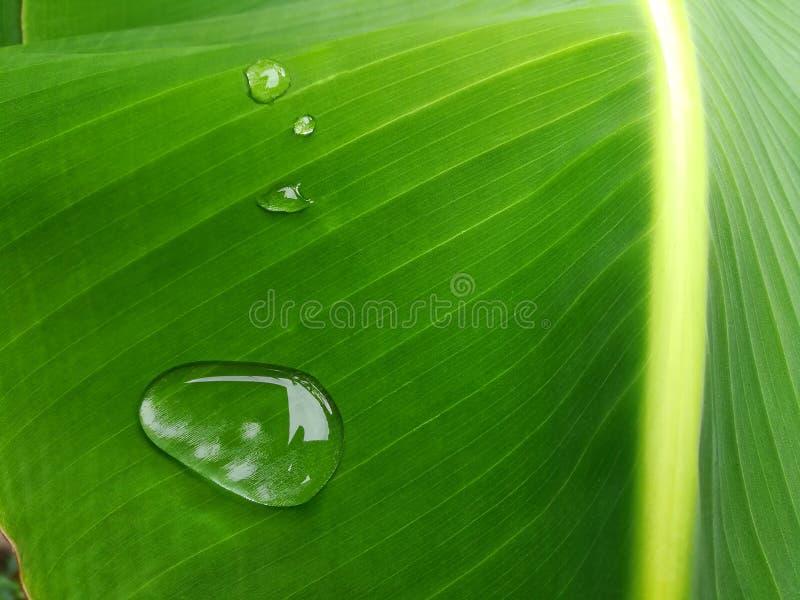 Падения росы на конце лист банана вверх стоковые фото