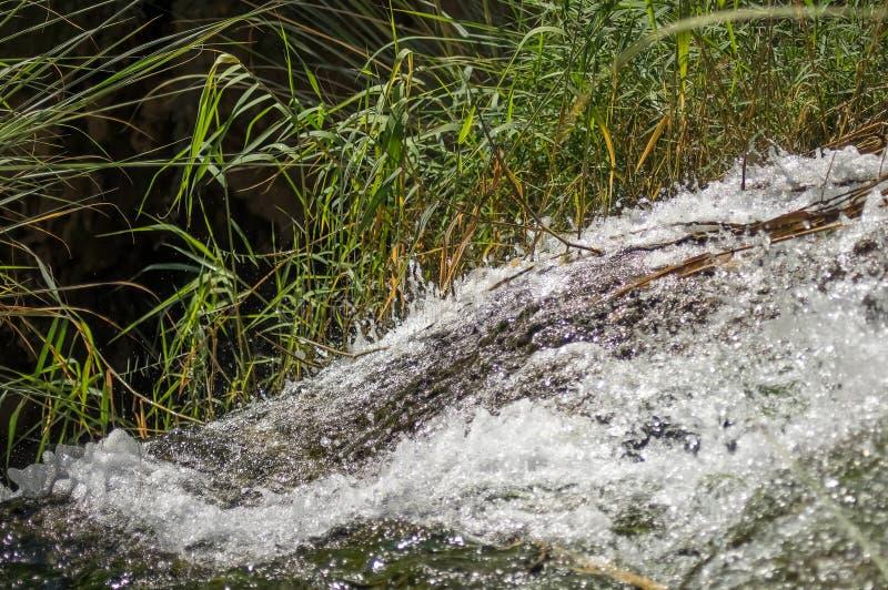 Падения среди травы, небольшого водопада стоковая фотография