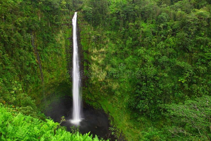 Падения Akaka, большой остров, Гавайи стоковая фотография rf