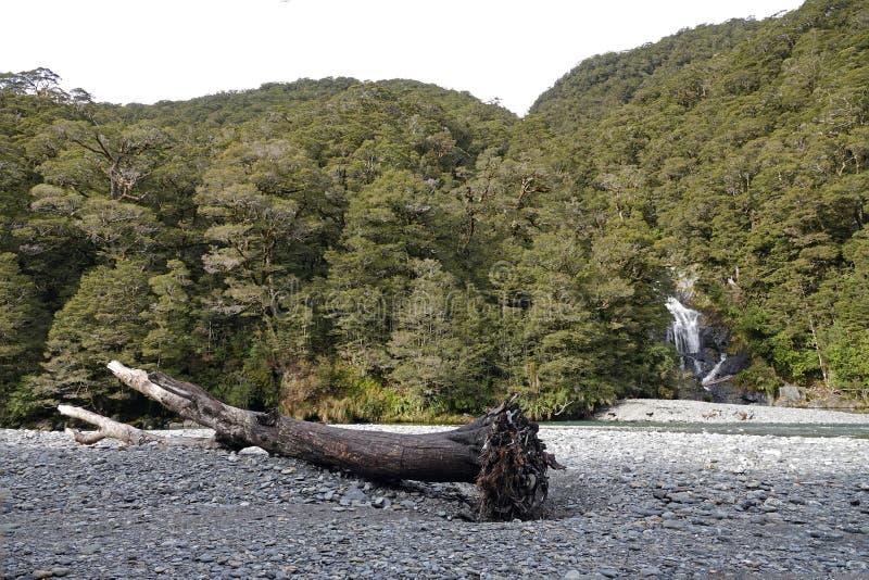 Падения Fantail на пропуск Новую Зеландию Haast стоковые фото
