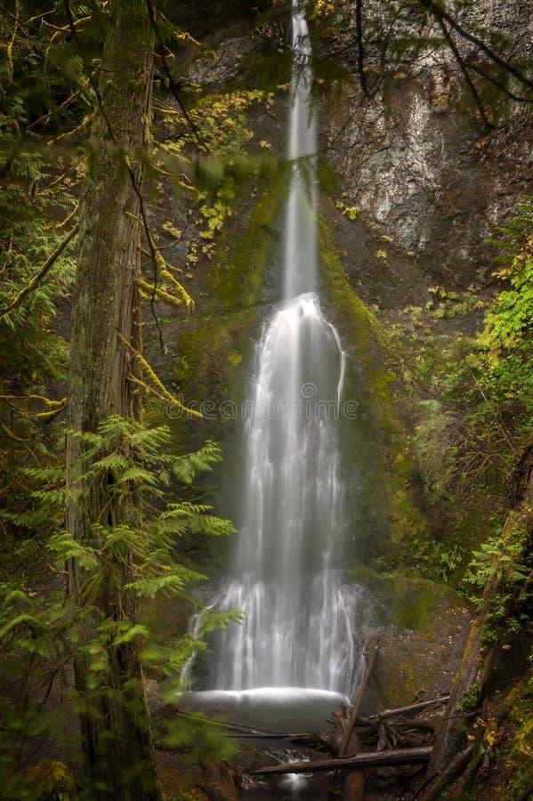 Падения Marymere расположены в олимпийском национальном парке около полумесяца озера в Вашингтоне, Соединенных Штатах стоковое фото rf