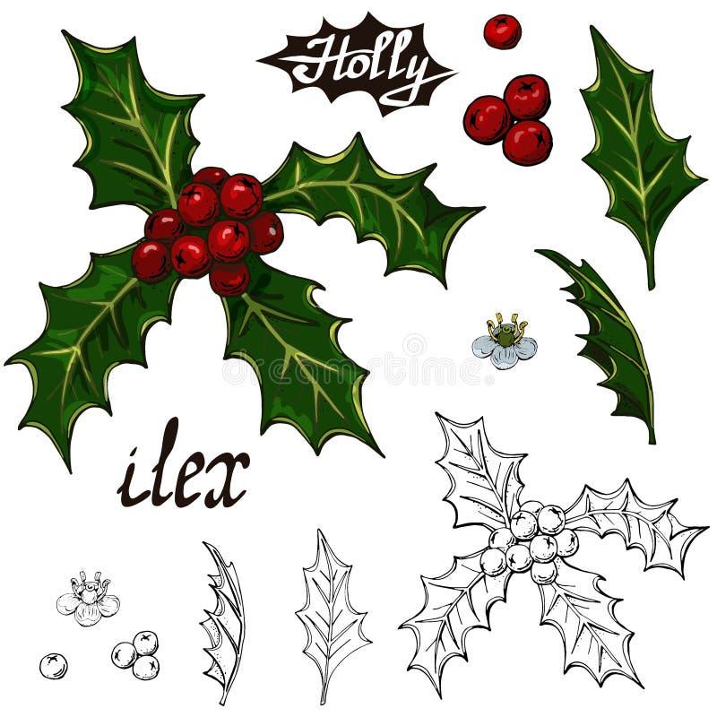 Падуб элементов рождества установленный на белой предпосылке бесплатная иллюстрация