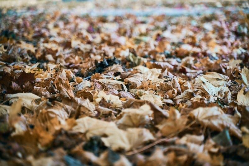 Падшее золото осенних листьев стоковая фотография