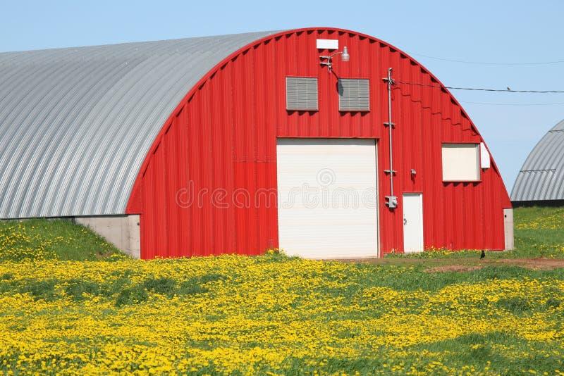 пакгауз красного цвета картошки стоковые фотографии rf