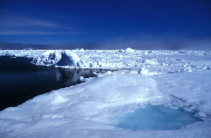 пакет льда ammassalik стоковая фотография