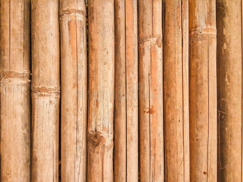 пакостная бамбуковая текстура стоковое изображение