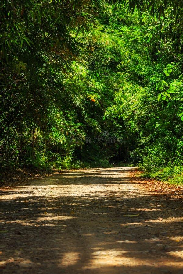 Пакостная дорога в лесе стоковые изображения