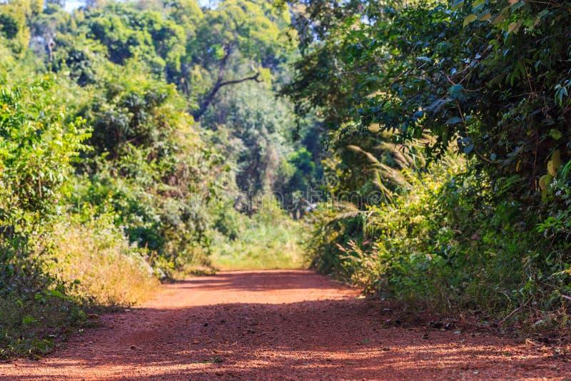Пакостная дорога через лес стоковое изображение rf