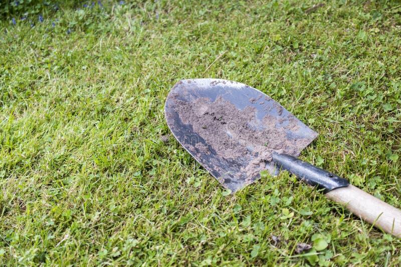 Пакостный лопаткоулавливатель в траве стоковые фото