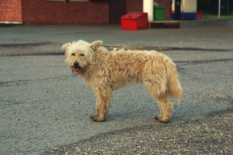 Пакостный, утомленный, бездомная собака стоковые изображения