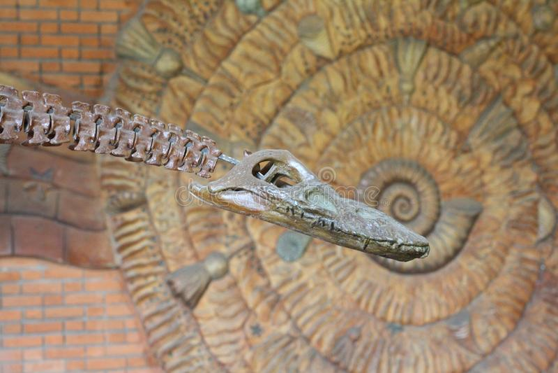 Палеонтологический музей Черепа и скелеты динозавров стоковое изображение