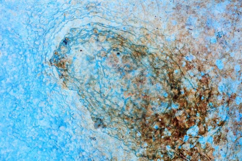 Палуба корабля с изящным искусством предпосылки макроса одуванчика голубого цвета абстрактным в высококачественных продуктах 50,6 стоковые изображения rf