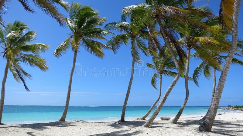 Пальма выровняла пляж в Punta Cana, Доминиканской Республике стоковые фотографии rf