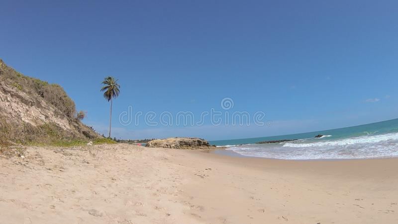 Пальма в пляже Jacumã-PB стоковые фото