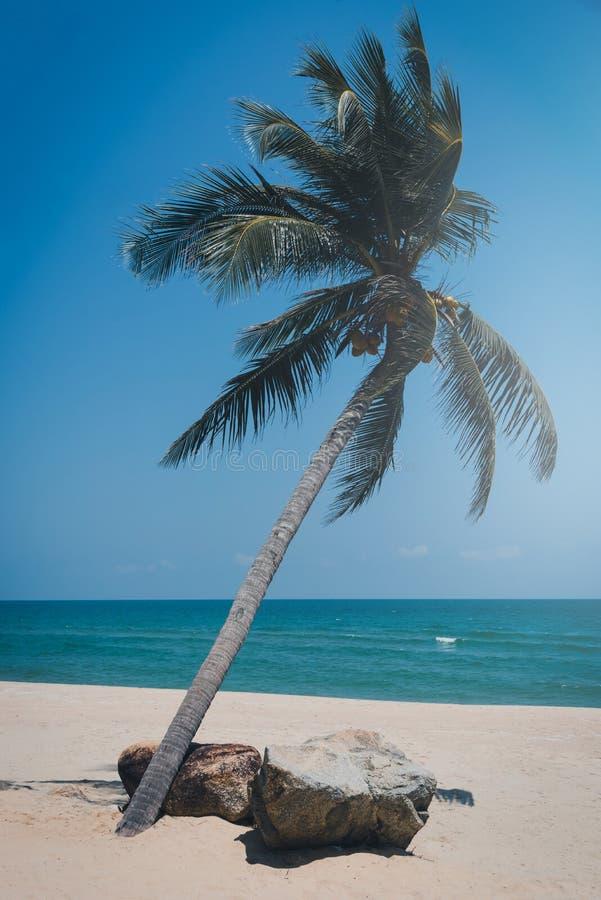 Пальма кокоса на тропическом пляже на дневном времени стоковое изображение rf