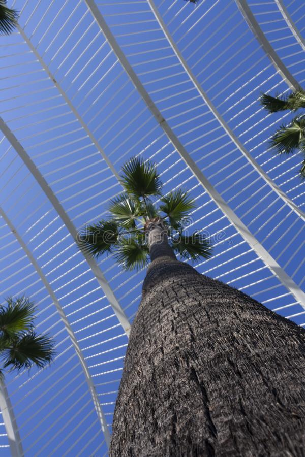 Пальма к небу между зданиями города искусств и науками стоковые изображения rf