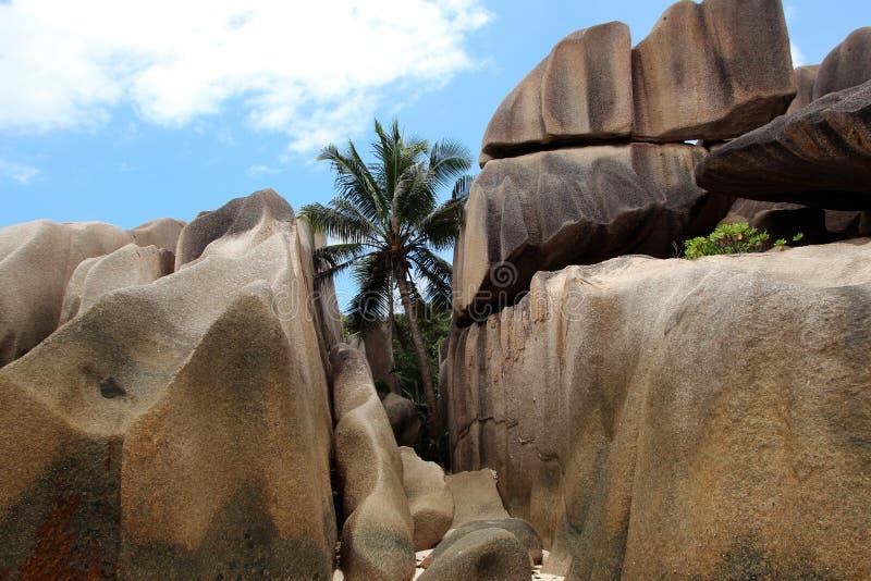 Пальма между утесами гранита в Сейшельских островах стоковые фотографии rf