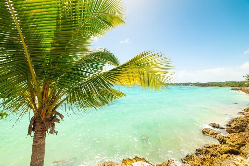 Пальма морем в Гваделупе стоковая фотография