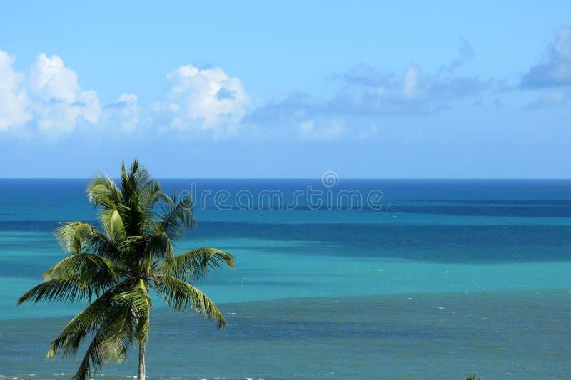 Пальма на предпосылке океана стоковое фото