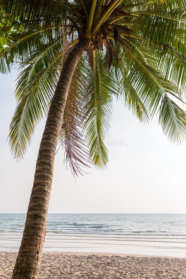 пальма пляжа красивейшая стоковые изображения
