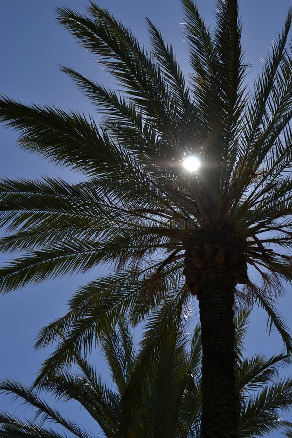 Пальма, поход к Стелла Maris в Хайфе весной, Израиль - цветистый путь и святая часовня семьи поверх Mount Carmel стоковые фото