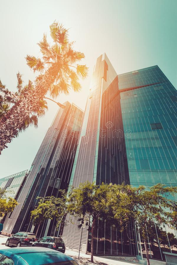 Пальма против голубого неба, винтажный тонизировать, городской пейзаж лета стоковое изображение