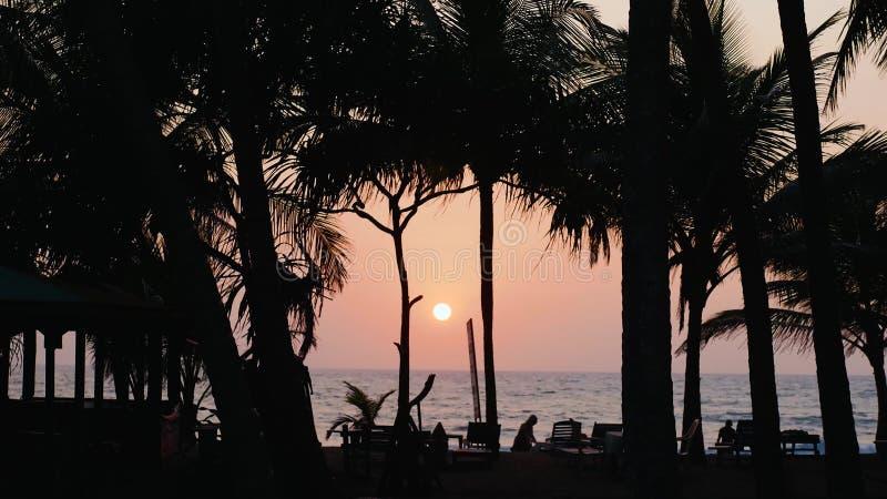 Пальма силуэта Timelapse на курорте бассейна гостиницы с зонтиком и стул на море океана солнца timelapse восхода солнца стоковые изображения