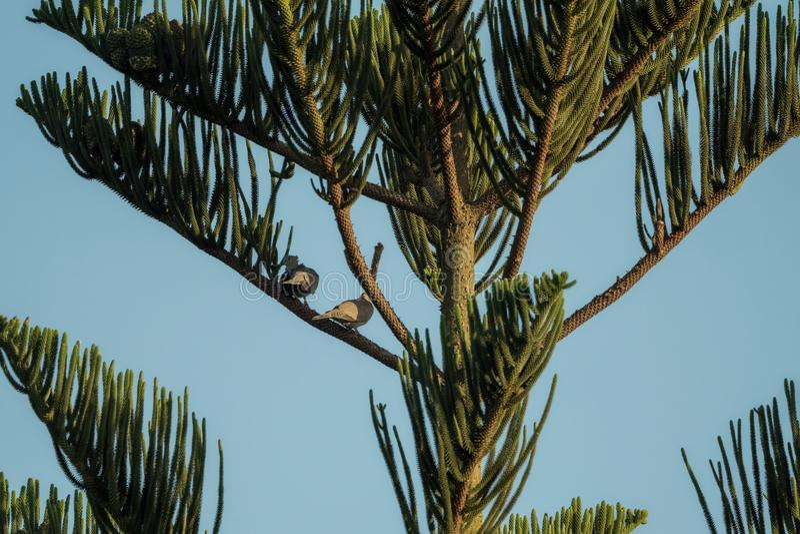 Пальма с голубым небом и 2 птицами стоковые изображения