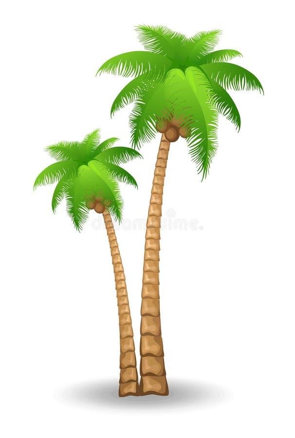 пальма иллюстрация вектора