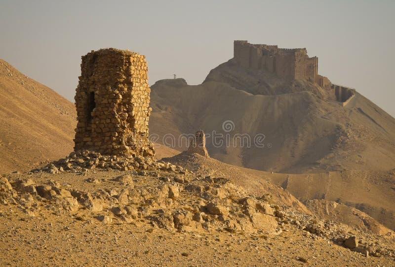 Пальмира стоковая фотография