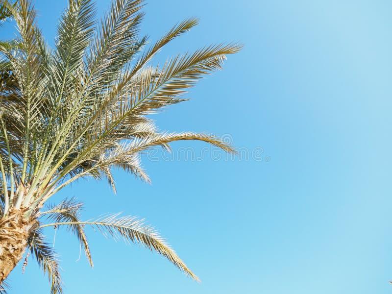 пальмовое дерево на фоне ясного голубого неба, вид закроется Фотография сделана в Египте Выборочная мягкая фокус Размыто стоковые фото