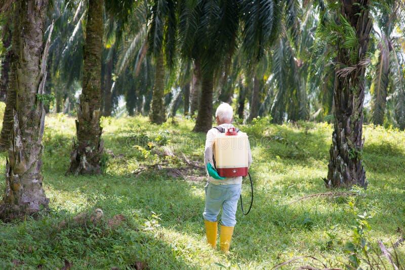 Пальмовое масло и работник стоковое изображение rf