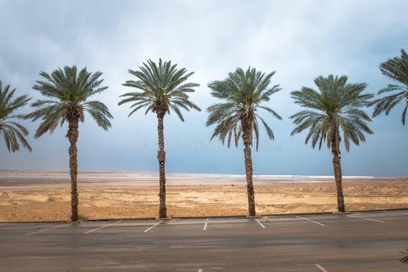 Пальмы в Израиле на мертвом море стоковое фото rf
