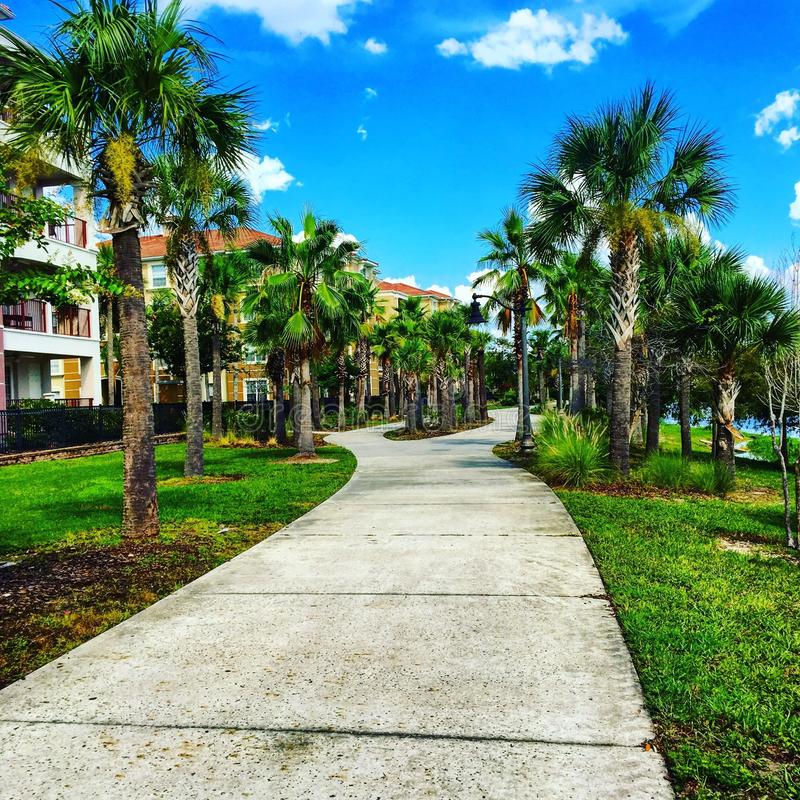 Пальмы в Орландо стоковая фотография rf