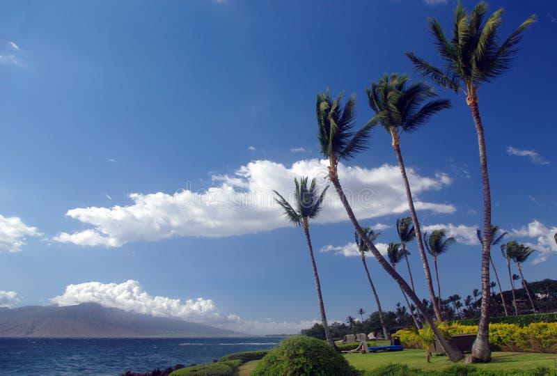 пальмы Гавайских островов стоковое изображение