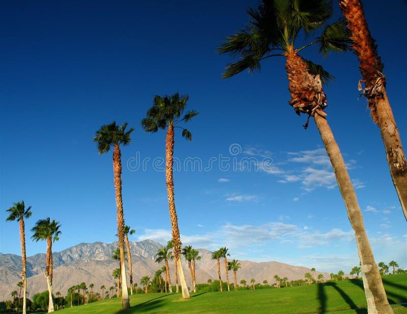 пальмы гольфа курса стоковые изображения rf