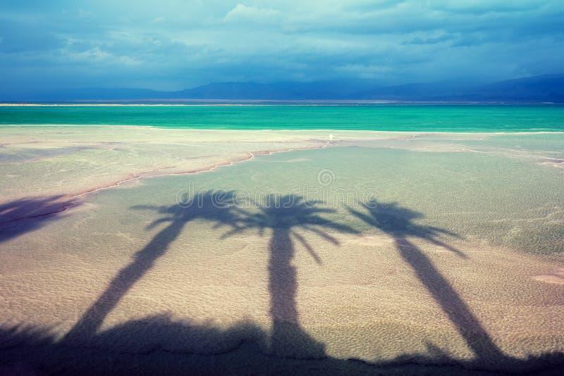 Пальмы затеняют на солёном береге мертвого моря стоковые изображения rf